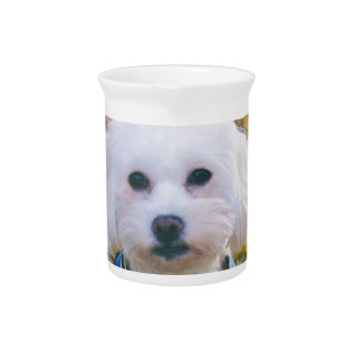 maltese-dog pitcher