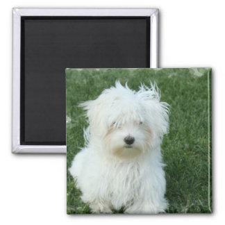 Maltese Puppies Square Magnet