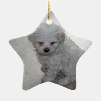 Maltese Puppy (9 Months Old) Ceramic Star Decoration
