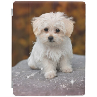 Maltese Puppy...Adorable iPad Cover