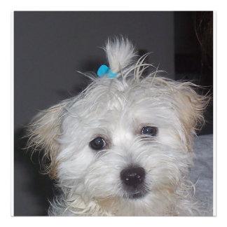 Maltese puppy art photo