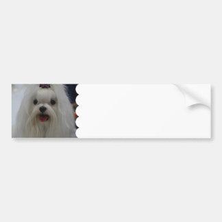 Maltese Puppy Bumper Sticker Car Bumper Sticker