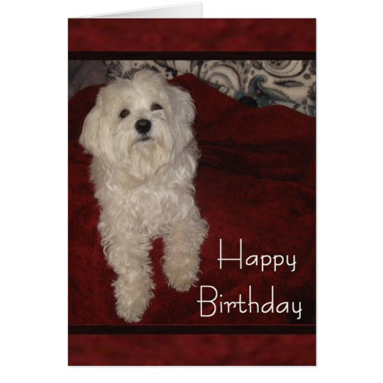 Maltese 'You're Still just a Pup' Birthday Card