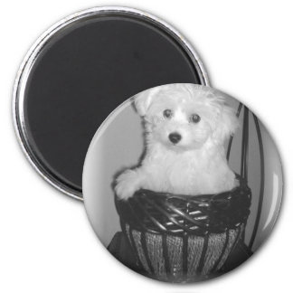 MaltiPoo Products 6 Cm Round Magnet