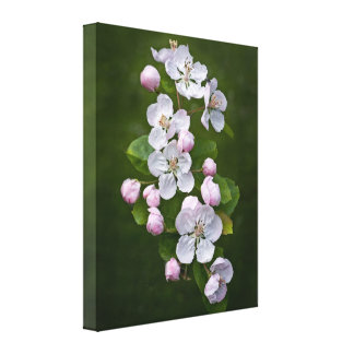 Malus Blossom Wrapped Canvas Print