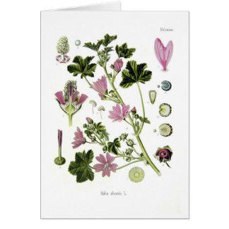 Malva silvestris greeting card