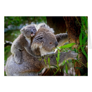 Mama and Baby Koalas Card