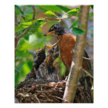 Mama and Baby Robins Poster
