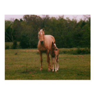 Mama horse and baby horse postcard