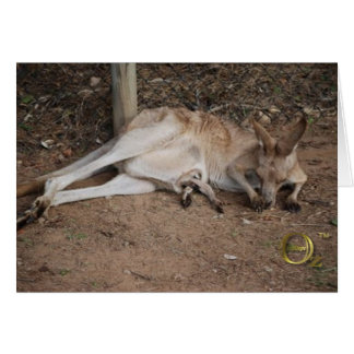 Mama Kangaroo with Joey in Pouch Card