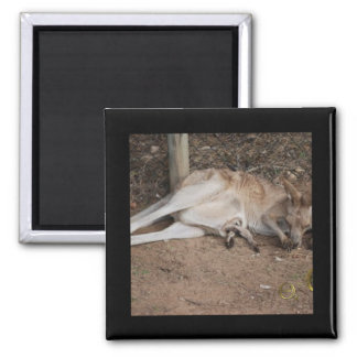 Mama Kangaroo with Joey in Pouch Square Magnet