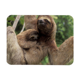 Mama Sloth And Baby Magnet