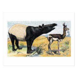 Mammals:  tapir & gazelle postcard
