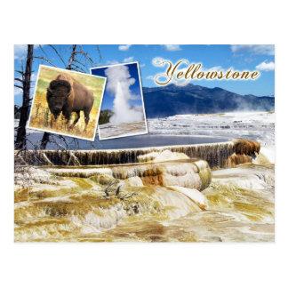 Mammoth Hot Springs, Yellowstone National Park Postcard