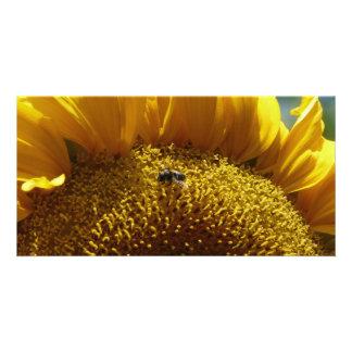 mammoth sunflower 2 custom photo card