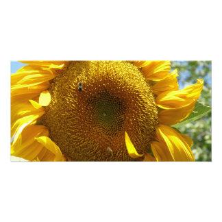 mammoth sunflower photo card