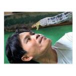 Man and Snake Postcard
