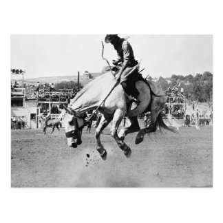 Man riding bucking horse in rodeo postcard