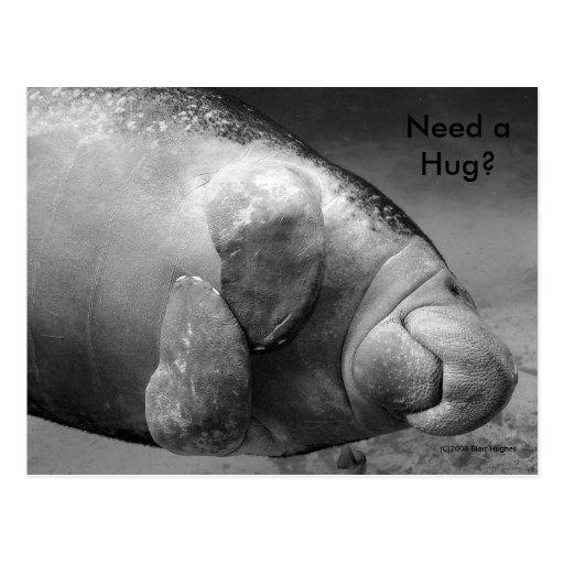 "Manatee BW0196 ""Need a Hug?"" Postcard"