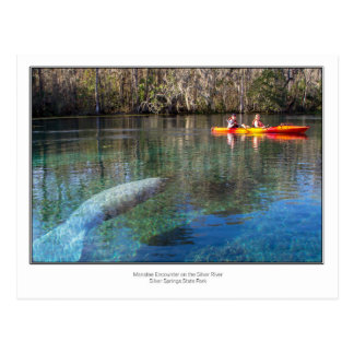 Manatee Encounter Postcard
