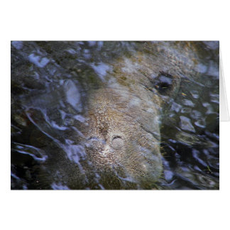 Manatee Everyday Note Card
