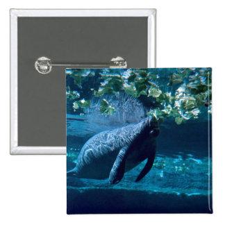 Manatee, Lowry Park Zoo, Tampa Bay, Florida, U.S.A Pin
