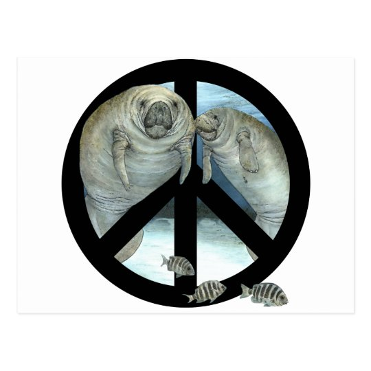 manatee peace postcard