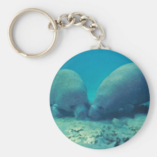 Manatee Rooting in Sand Key Ring