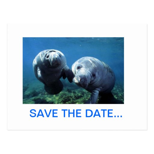MANATEE SAVE THE DATE POSTCARD