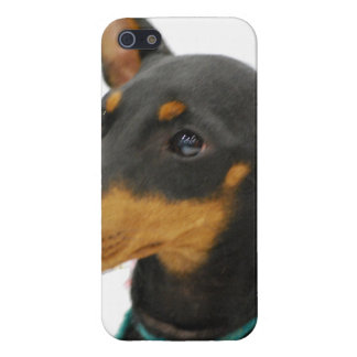Manchester Terrier Cover For iPhone 5