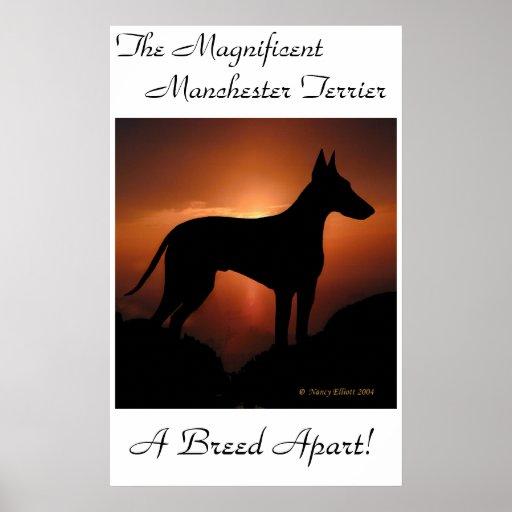 Manchester Terrier Unique Poster