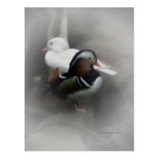 Mandarin Duck and Friend... Postcard
