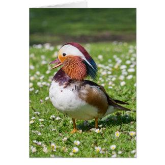 Mandarin Duck Blank Greeting Card