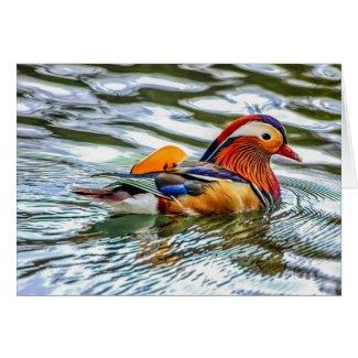 Mandarin Duck Card