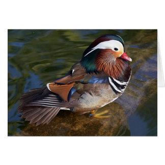 mandarin duck note card