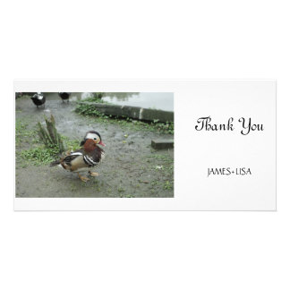 Mandarin Duck Photo Greeting Card