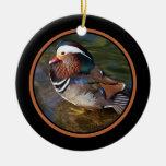Mandarin Duck - Rusty Round 1