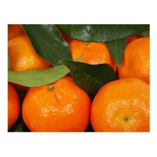 Mandarin Oranges Postcard