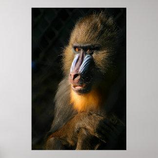 Mandrill Monkey Print