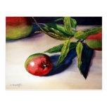 Mango I Postcard