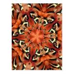 Mango Pheasant Feather Kaleidoscope  Mandala
