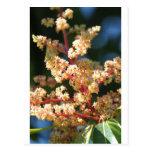 Mangoflowers Post Cards