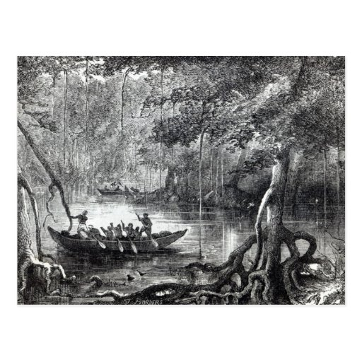 Mangrove Forest' Postcards