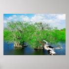 Mangrove Trees & Anhinga, Florida Everglades Poster
