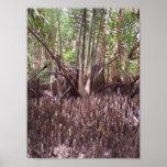 Mangroves Print