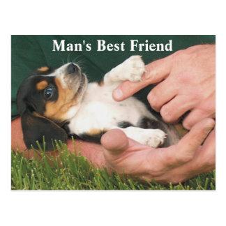 Man's Best Friend Beagle Puppy Postcard