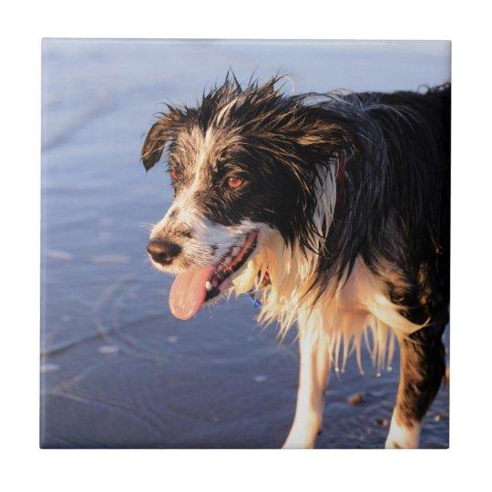 Mans best friend border collie dog small square tile