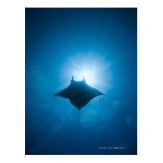 Manta swimming underwater postcard