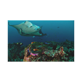 Mantarays over anemone - Canvas Canvas Print