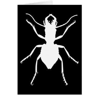 Manticora tuberculata card